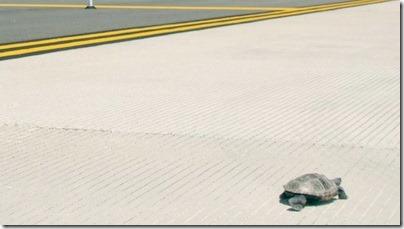 Flight delay เมื่อเต่าบุก สนามบิน JFK