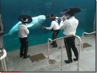 ปลา dance  แสนรู้จัง เจ้าปลาวาฬ